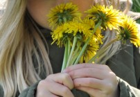 Hay fever or Pollinosis - Upper Respiratory Infections