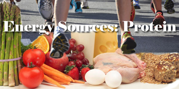 Energy Sources: Proteins