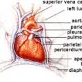 Liikunta ja sydänsairaudet