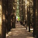 helsinki.city.trail
