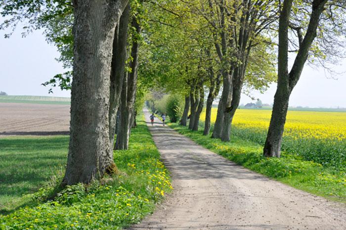 sweden run route
