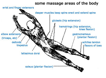 Massage Areas of the Body